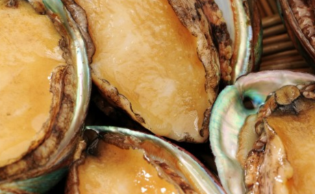 Source Natural Store, a Hong Kong based Live & Fresh Seafood specialist